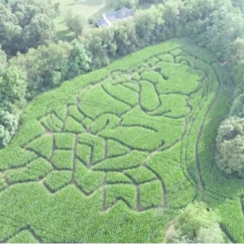 Troyer's Corn Maze and Pumpkin Patch
